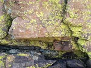 Rim Rock Lichen