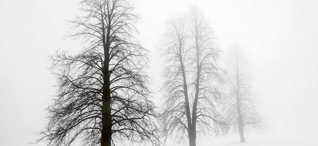 9-winter-trees-in-fog-elena-elisseeva