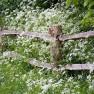wildflowers_2513045b